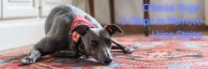 Pet's and Oriental Rugs